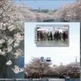 京浜東北線の桜