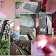 大森・川崎:JR沿線の桜が満開