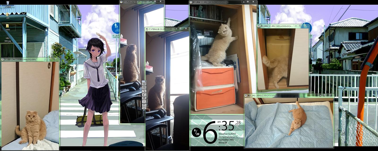 猫は冷感敷きパッドがお好き